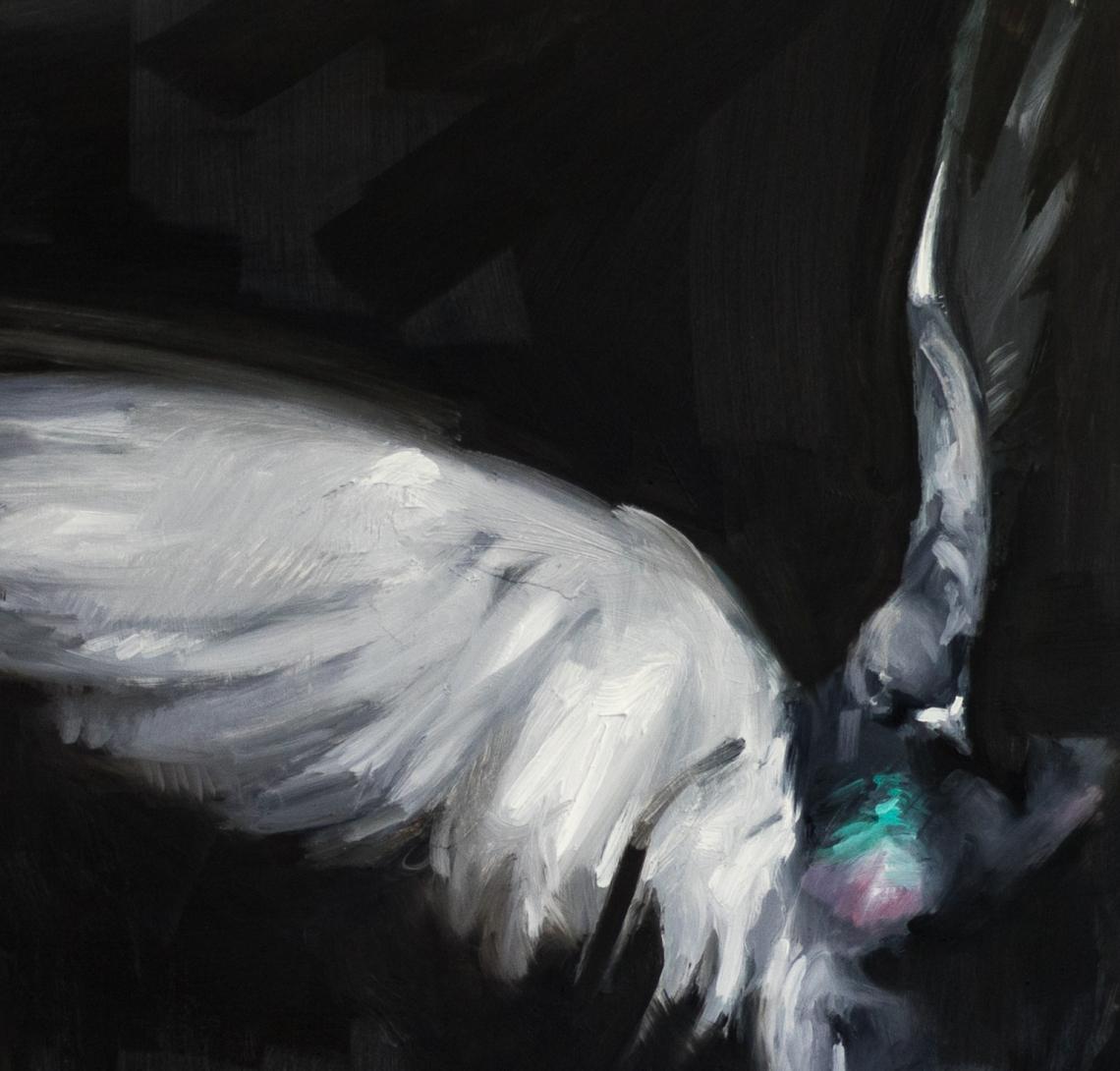 landing_pigeon